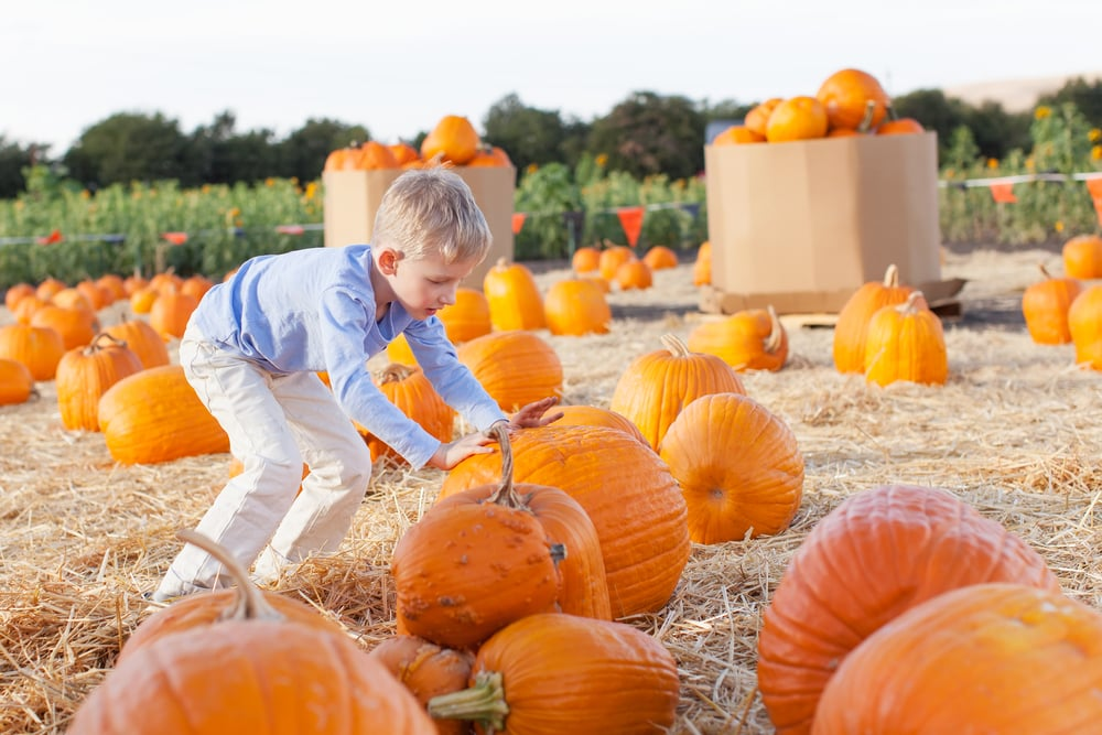Pumpkin Prayer For Kids + FREE Printable Activity